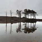 reflected trees 2