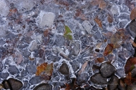 ice, stones, leaves