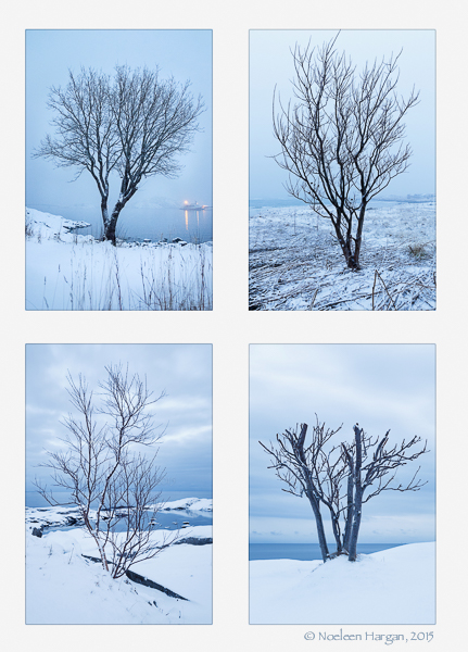 4 portraits of winter trees, Lofoten